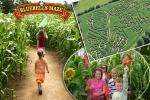 £6 instead of £18.50 for two adults and two children to embark on a fun, family adventure as you make your way through over two miles of the Bluebells Maise Maze (Derbyshire) - Save 68%