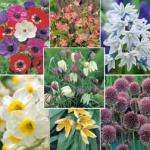 160 Free Spring Flower Bulbs just pay P&P of £4-50 @ Thompson & Morgan