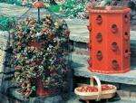 Strawberry Tub for £16.00 - holds 24 plants @ garden4less