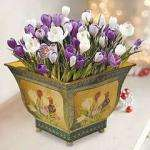 Expired - Decorative potted crocus or grape hyacinths now £4.99 each ( at least 67% off), plus free bouquet of carnations @ Thompson & Morgan
