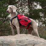 3 Peaks Terrain Pack Dog Harness £19.99 - Pets at Home
