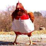 Whole Medium Elmwood Chicken £3 @ The Co-operative