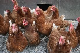 6 Free Range Eggs 85p @ Tesco