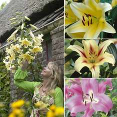 Fantastic Value Lily Collection - 9 Bulbs - £3.99 Delivered @ Thompson & Morgan