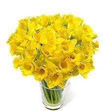 20 Daffodils 89p at Lidl
