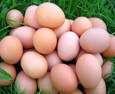 15 medium size eggs only £1 @ Netto