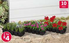Bedding Plants - 10 Pack £2.49 or Two (20 plants) for £4 at Lidl