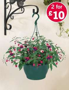 Large Filled Hanging Baskets 2 for £10 at Lidl from 5th May