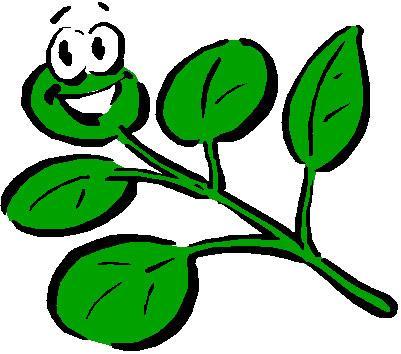 Plants and seeds for pound @ Poundland