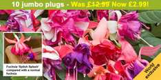 Giant Fuchsias - 5 jumbo plugs  £1.99 for 10 for £2.99 @ Thompson & Morgan + £4.45 pp