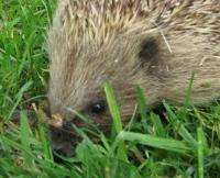 Free Hedgehog Set