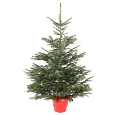 Nordmann Fir 5-6ft Real Christmas tree (pot not included) for £21.99 delivered @ JTF Wholsesale ...