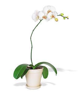 different types of orchids 5 tesco instore hotukdeals. Black Bedroom Furniture Sets. Home Design Ideas