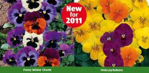 Winter Bedding Plants - 20 Pack for ONLY £2.49 @ Aldi