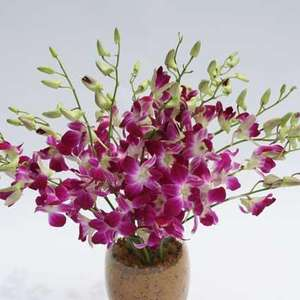 A lovely bouquet of 30-40 blooms of deep pink Dendrobium Orchids. Only £9.99 delivered.  Valueflora Back in stock. (13%quidco) (Top cash back as well 13.39%)