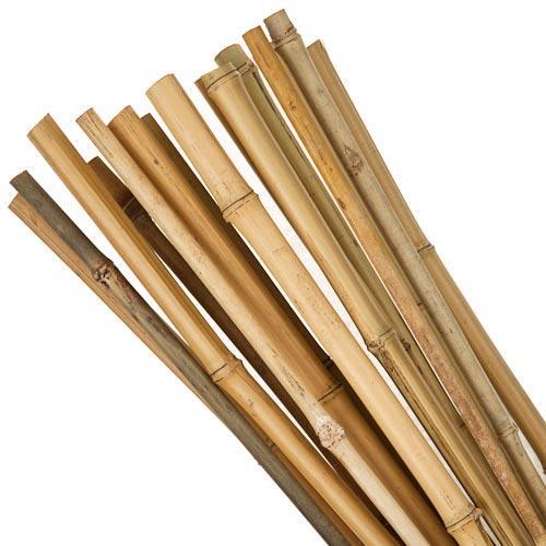 20 Pack Bamboo Canes @ poundland.  £1.00
