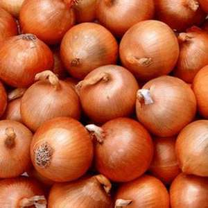 5KG Sack of Onions @ Lidl only £1.99!