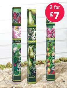 Fruit Trees - 2 for £7.00 @ Lidl