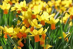 FREE Entry Day to all RHS Gardens on Friday 2 March 2012. Adult prices usually from £7 to £11.55 each.