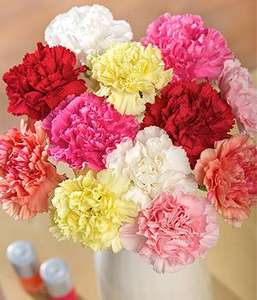 Classic Carnations bouquet + Chocolates £10.79 delivered @ Bunches