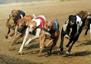 Free Admission and A Free Drink to Greyhound Racing (Just cost of one text) @ Love The Dogs