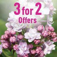 3 for 2 offers on various plants + Free delivery on all orders with no minimum spend @ Jersey Plants Direct