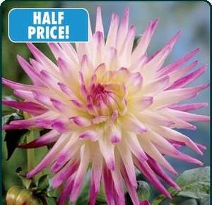£2.76 for 3 Dahlia  tubers, PLUS FREE P&P  @ Mr Fothergills direct