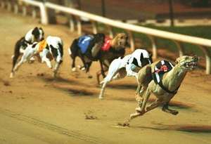 FREE entry, FREE racecard and a FREE burger with an Oyster card at Wimbledon Dog Track!