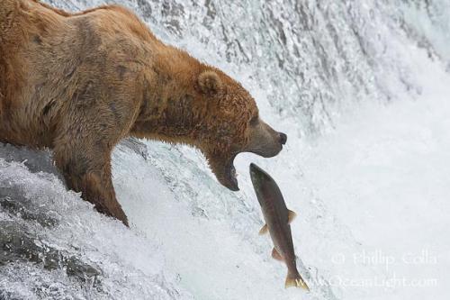 ASDA Chosen by You Wild Alaskan Whole Salmon (840g) - £2.00