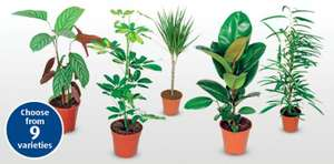 £3.99 House Plants at Aldi