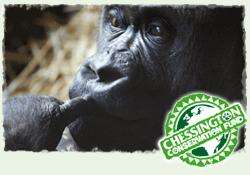 Chessington Conservation Evening £5.00 entry on Saturday 23rd June.