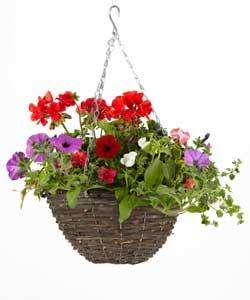 Large 60cm Hanging Baskets down to £2.00 @ Homebase