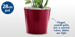 £4.99 for a 28cm ceramic plant pot @ Aldi