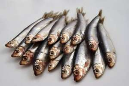 Sprats (FRESH fish), £1.99 / kilo @ Morrisons