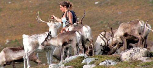 adopt a cairngorm reindeer for £34 a year @ cairngormreindeer.co.uk