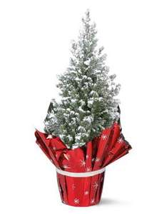 Mini real Christmas Tree £1.99 from Thursday @ Lidl