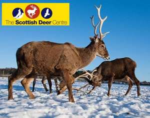 Over 50% off  a family ticket at the Scottish Deer Centre