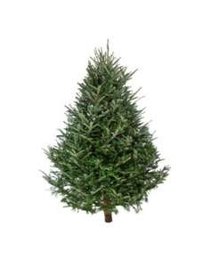 Real Christmas Tree 6ft - £7.99 @ Home Bargains