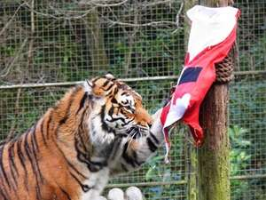 Half price admission at the Welsh Mountain Zoo, from 15th December to 6th January
