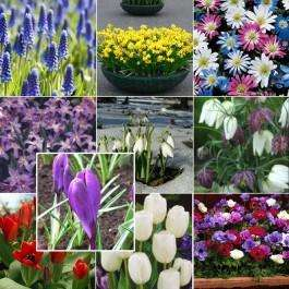Blooming Direct £10 of bulbs for £3