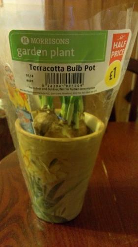 Terracotta Bulb Pot Garden Plant HALF PRICE £1 @ Morrisons