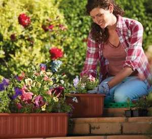 Fruit trees, standard rose bushes 3.99 (plus other garden bargains from March 4th) @ Lidl