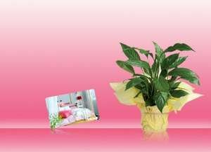 Buy £10+ Gift Card and get Free Peace Lily plant worth £7.50 @IKEA