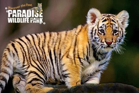 Paradise wildlife park ticket half price £8 on groupon pwpark.com
