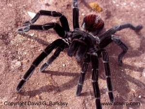 Friendly Spider programme £135 @ ZSL
