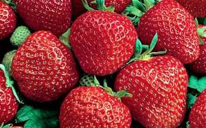 free 6 pack of strawberry plants at homebase when you buy the Saturday or Sunday telegraph  and £5 off a £25 spend on garden plants