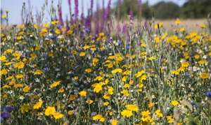 FREE BEE FRIENDLY FLOWER SEEDS