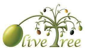 Standard Olive Tree £10.99 @ Lidl from 13/6/13