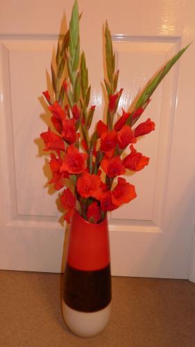 Aldi - beautiful gladioli - only £1.59 for 5 stems