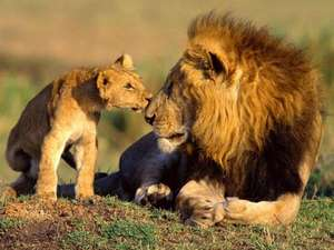 Knowsley safari park half price annual membership £20 adults ( single visit costs £16 )  £15 kids ( single visit costs £12 )  when you visit starting Monday for 1 week only.